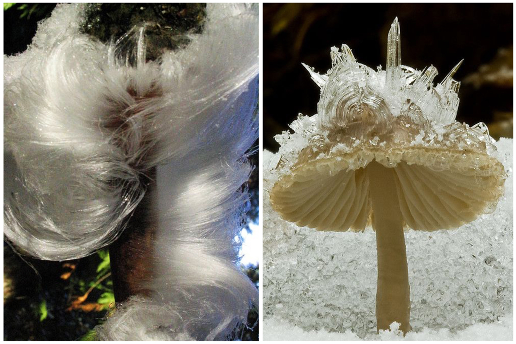 Green Design Blog Frost flower czyli kwiat malowany lodem