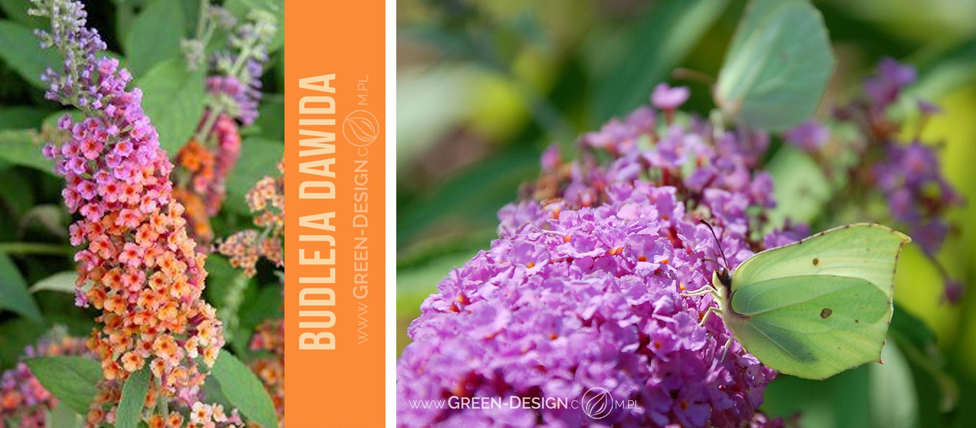 Green-Design-Blog_budleja_cover_photo_1