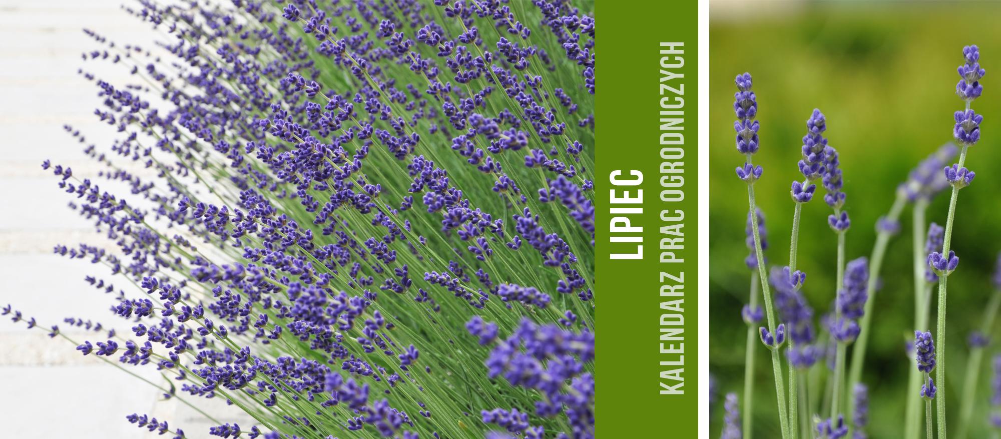 Green-Design-Blog_lipiec_cover_photo_2