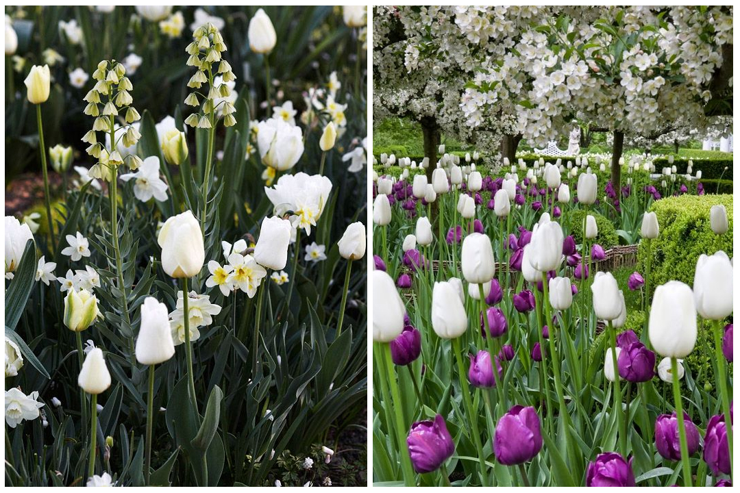 green-design-blog_cebule-kwiatowe-24