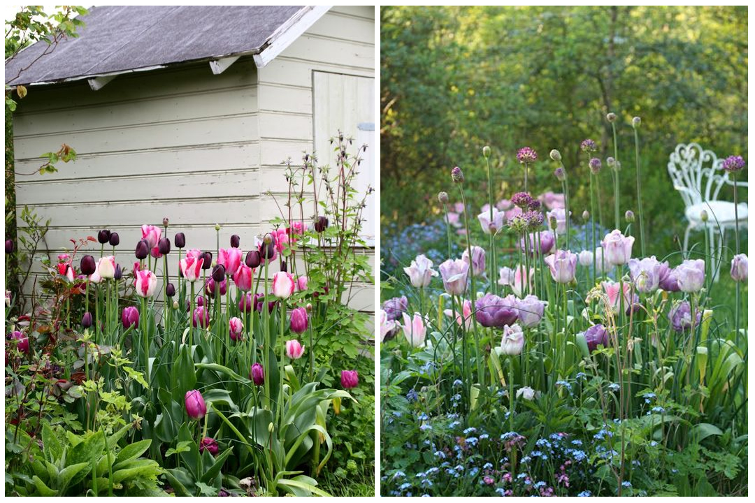 green-design-blog_cebule-kwiatowe-25