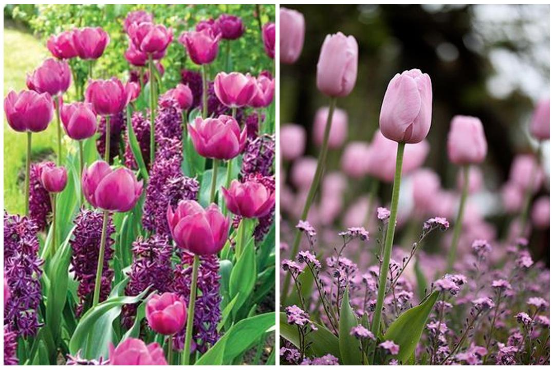 green-design-blog_cebule-kwiatowe-27