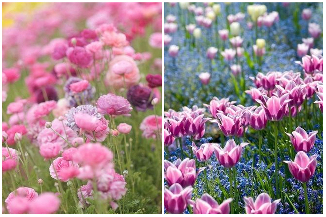 green-design-blog_cebule-kwiatowe-29