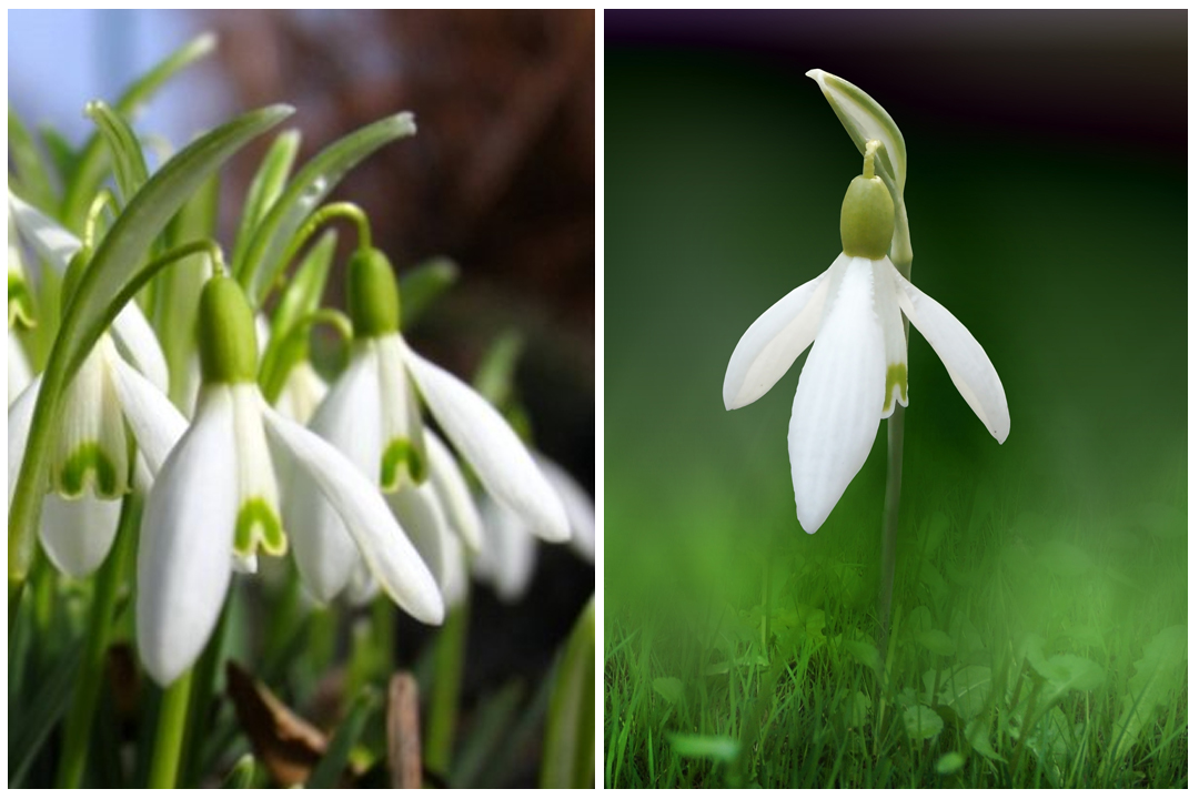 green-design-blog_cebule-kwiatowe-7