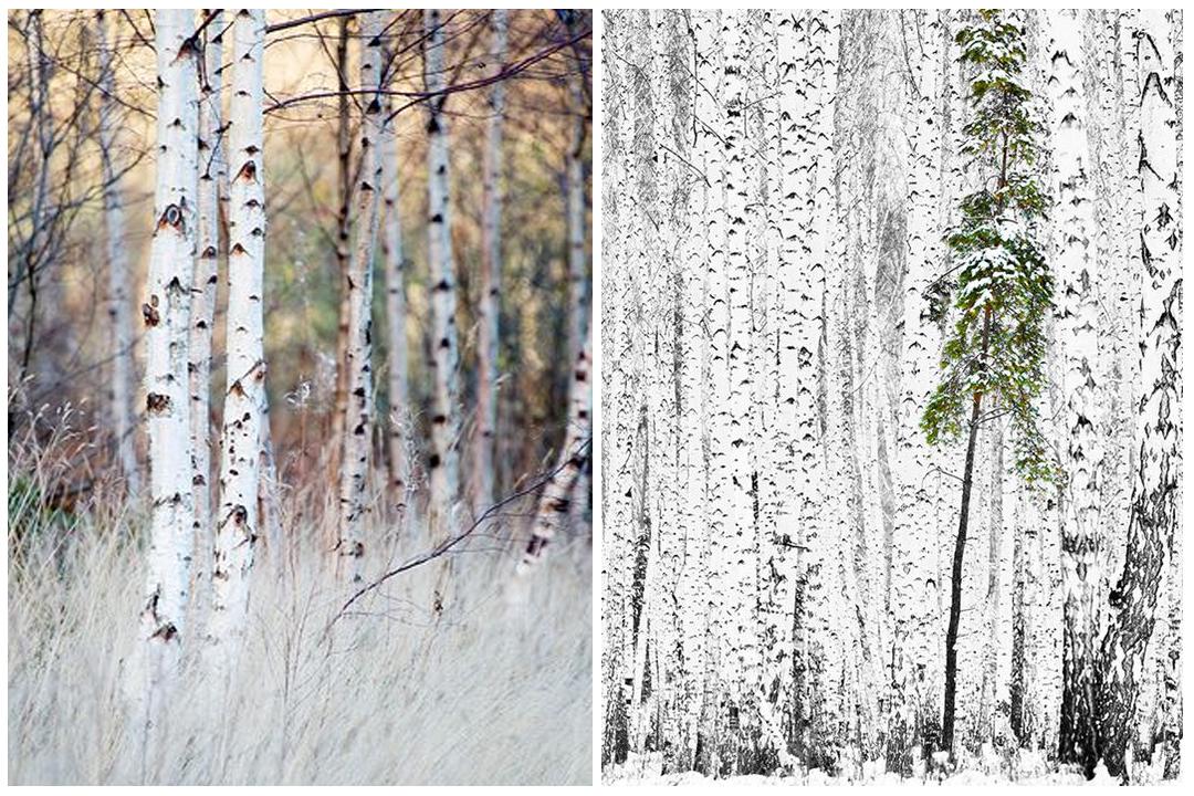 green-design-blog_ogrod-zima-7