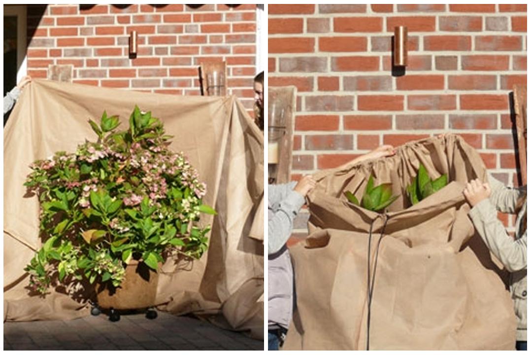 okrywanie roślin