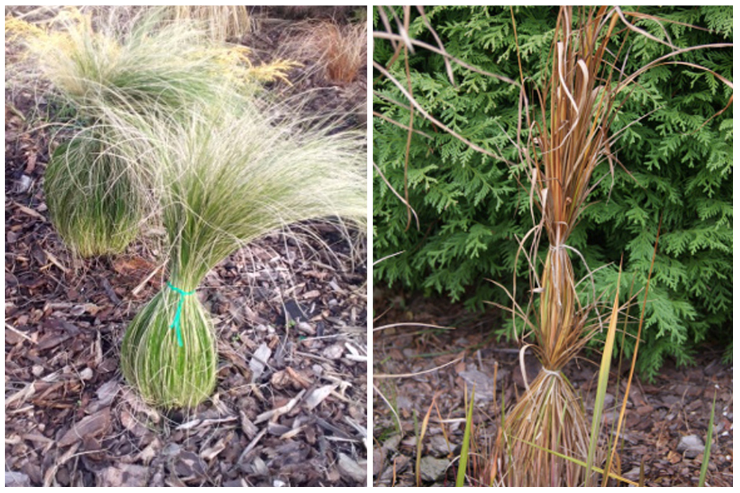 green-design-blog_okrywanie-20