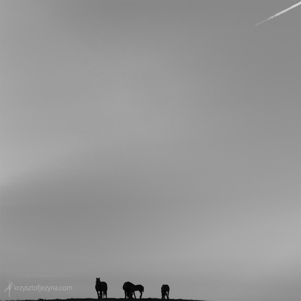 Fotografia minimalistyczna Krzysztof Jeżyna 05