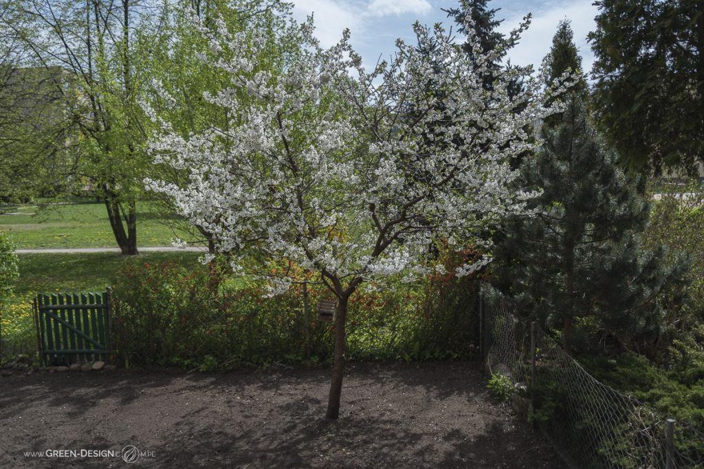 Wiosenne porządki w ogródku
